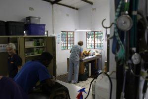 A volunteer veterinarian carefully sterilizes a patient dog